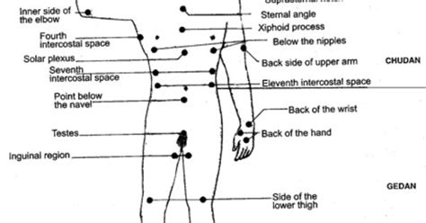 diagram of pressure points on the human human pressure points diagram anatomy physiology