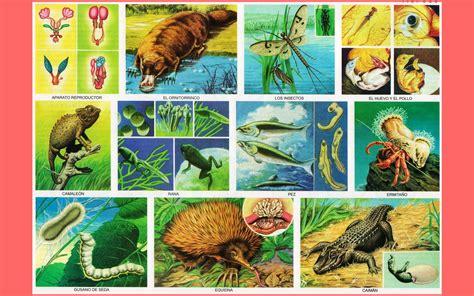 imagenes de laminas escolares animales oviparos imagenes wallpapers laminas