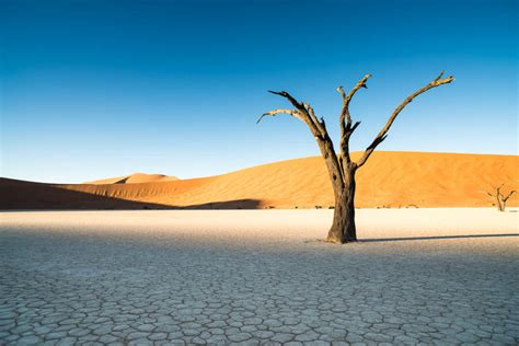 Beautiful Family by Deadvlei Sossusvlei Namibia Ian Purves