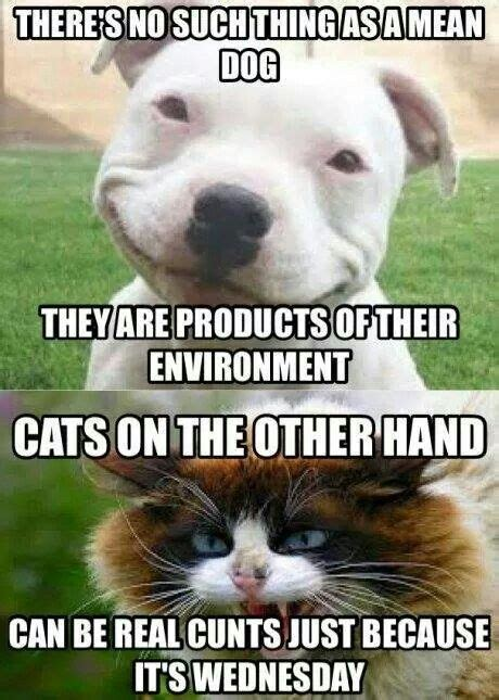 Memes About Dogs - best 50 funny cat vs dog memes images to prove who s boss