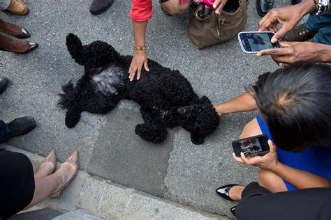 obama dogs obamas bo breeds picture