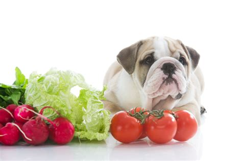 veggies for dogs veggies to with your