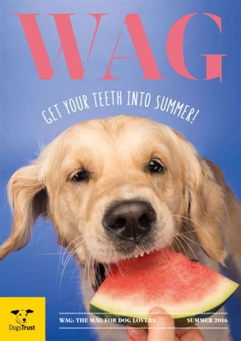 dogs trust golden retriever 52 best wag magazine images on dogs trust finals and your