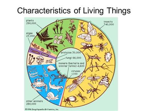 characteristics of sectionalism studying life section 1 3 identify characteristics of