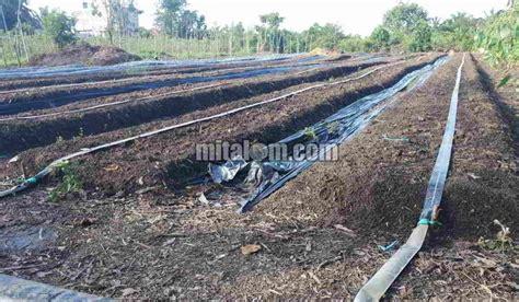 Harga Selang Drip Irigasi Tetes 12 cara memasang selang drip drip irigasi tetes di lahan