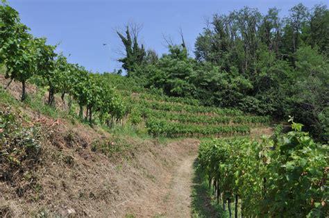 terrazze di montevecchia terrazze di montevecchia terre lariane