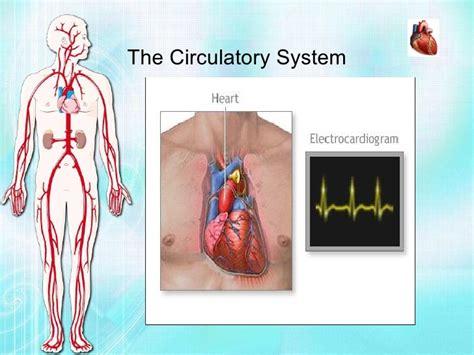 Home Design App Review biology project circulatory system vijay raja std vii