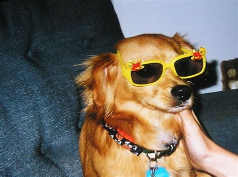 puppies wearing sunglasses dogs wearing sunglasses 65 pics