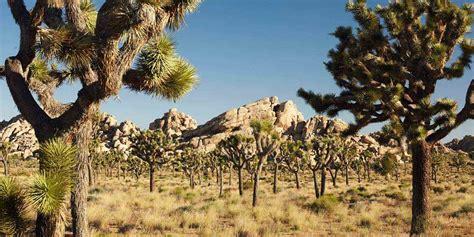 Rugged Watch 6 Unforgettable Desert Parks Visit California