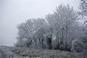 pictures of trees frosty trees am birting