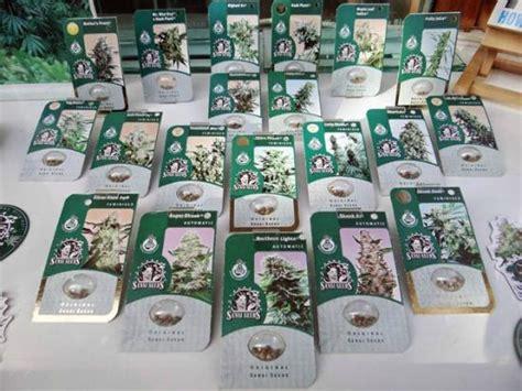 sensi seeds bank sensi seed bank picture of sensi seed bank amsterdam