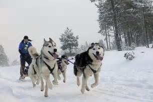 dsc9608 arden grange siberian husky club sled rally