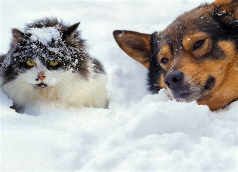pet md how do fleas survive winter petmd