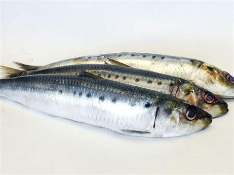 cucinare sardine ricette con sardine