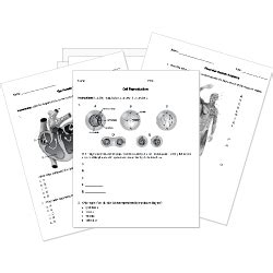 Printable Biology Worksheets Anatomy Physiology Botany