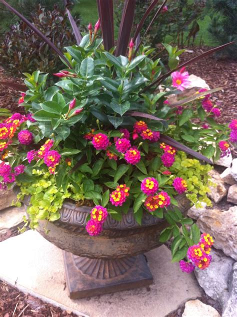 lantana container garden 1000 images about container flowers on