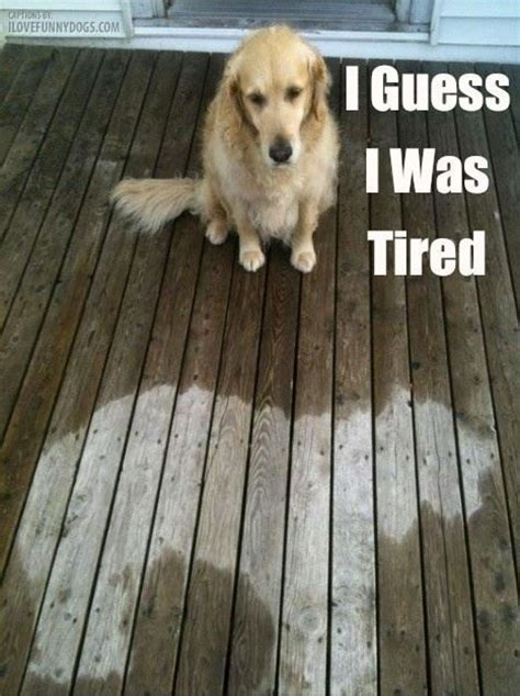 Too Tired Meme - tired dog memes image memes at relatably com