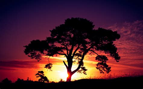 Landscape Photography With Sun S 187 Landscape Photography Sun Sunset Tree