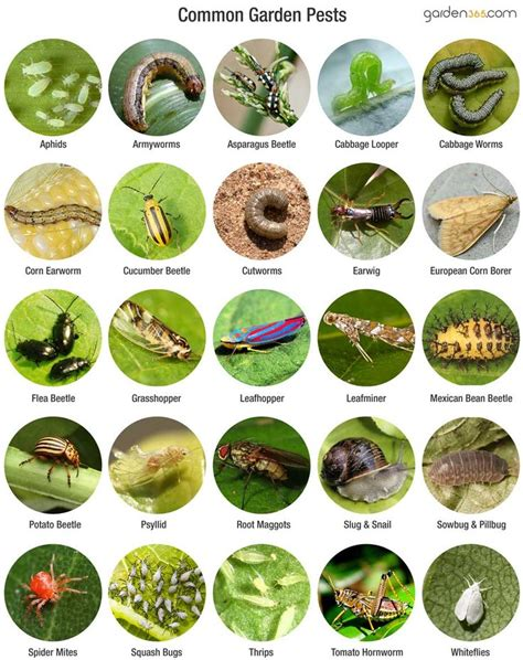 garden pests identification 579 best images about z identify on