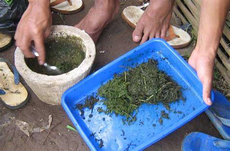 Ekonomi Deterjen 3 Kg membuat pestisida alami bagus