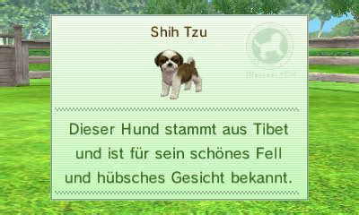 nintendogs shih tzu shih tzu nintendoegs wiki fandom powered by wikia
