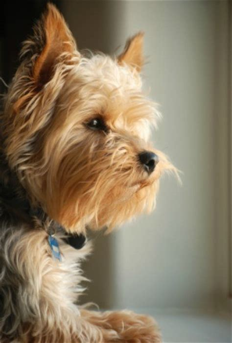 dogs with anxiety remedies for dogs with separation anxiety thriftyfun