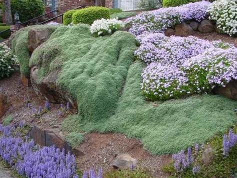 Landscaping Ideas Ground Cover Landscaping Ideas For Front Of House Small Yard Cheap