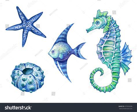 nautical elements sea life fish seahorse stock