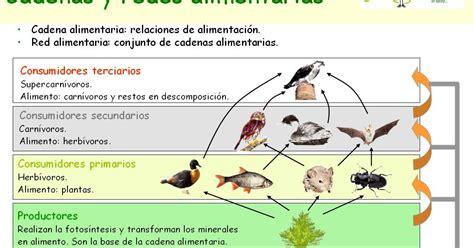 cadenas alimentarias y sus elementos temas de ciencias naturales cadenas alimenticias