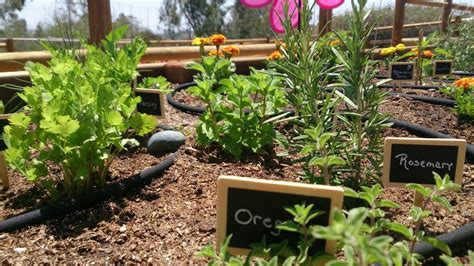 calling all green thumbs and helping get involved