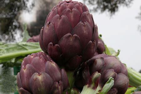 il seme tuo co testo carciofo opera f1 di nunhems il seme ibrido conviene