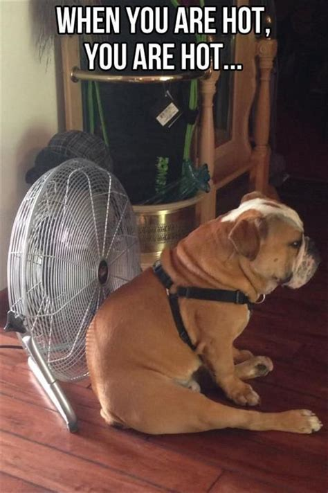 so hot funny pic 63 best images about hot weather humor on pinterest