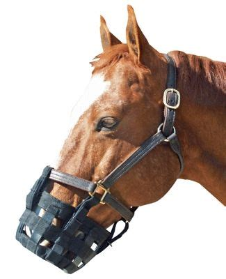 Cribbing Muzzles For Horses by Best Friend Equine Grazing Muzzle Equestriancollections