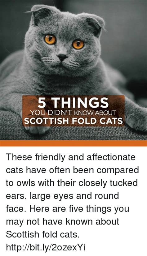 Top 5 Things You May Not Know About Minecraft Pe Mcpe - 25 best memes about scottish fold scottish fold memes