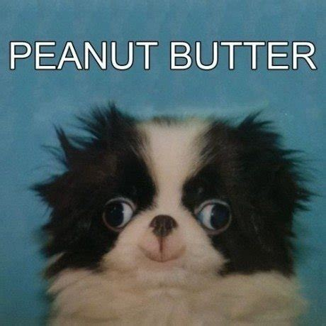 is peanut butter for puppies lol puppy animal derp pup peanut butter knowyourmeme