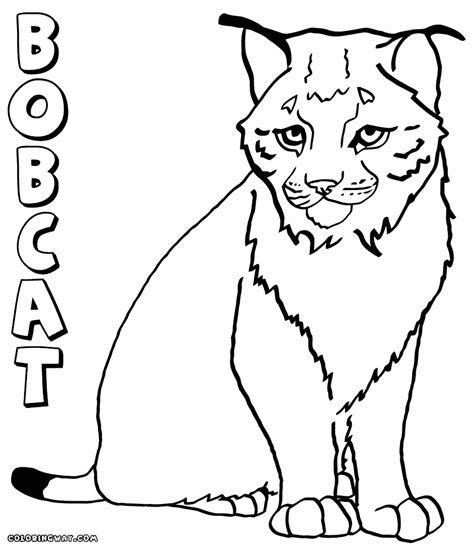 coloring pages of canadian animals canada lynx coloring page coloring home