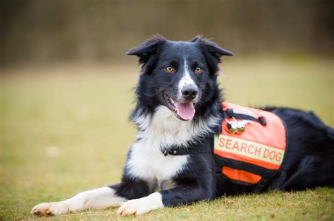 search dogs about search dogs