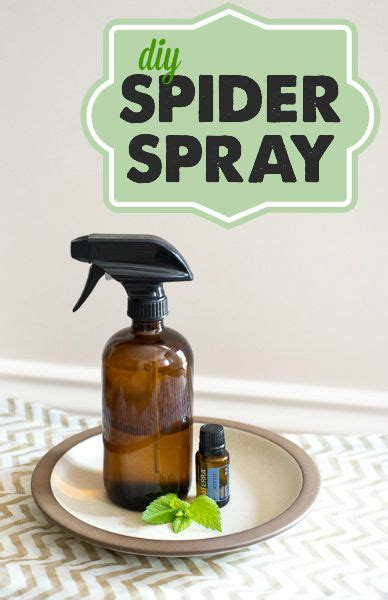 Wouldn T A Detox Kill Horsetail by 17 Best Ideas About Spider Spray On