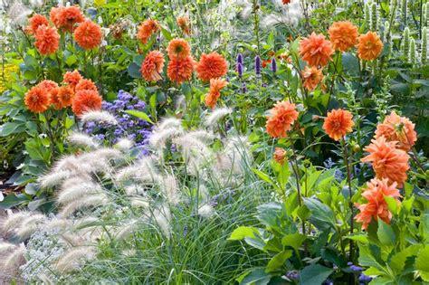 anna s perennials fall flowering perennials garden ideas border ideas perennial planting perennial