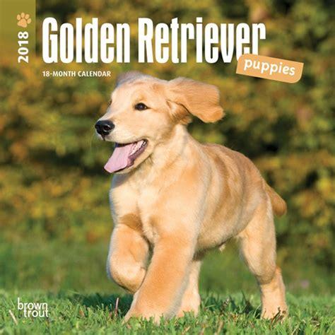 2018 golden retriever calendar golden retriever puppiesmini wall calendar 9781465086907 calendars