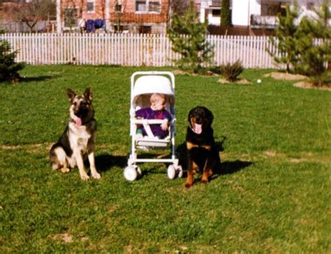 rottweilers and children rottweiler photos pictures rottweilers page 7 breeds