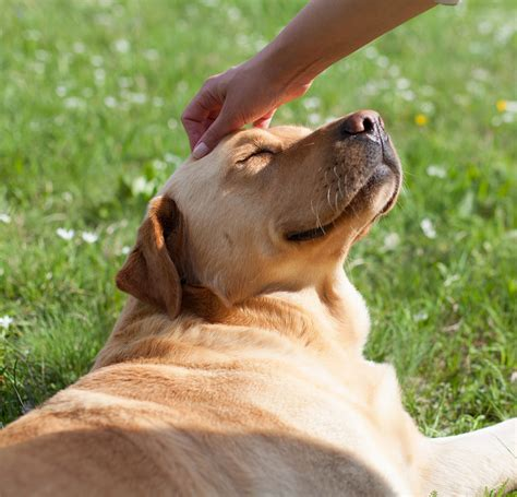 temaril p for dogs side effects temaril p a complete guide to your s prescribed