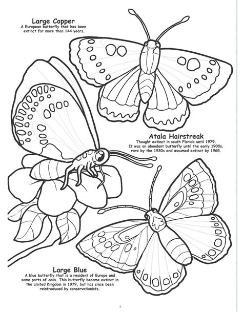 coloring pages of birds and butterflies coloring books butterflies and birds really big giant