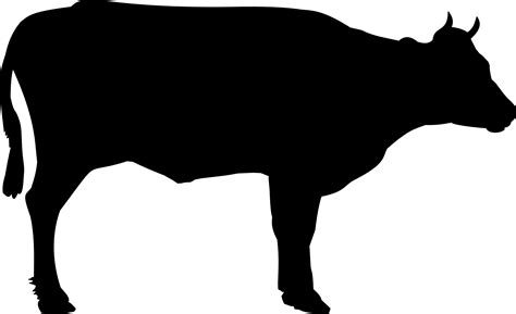 steer clipart clipart steer