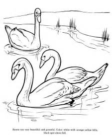 Swan Coloring Page sketch template