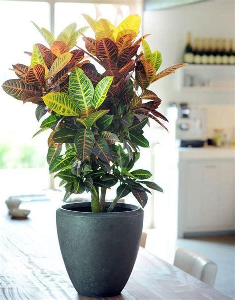 houseplants   list  special   bold