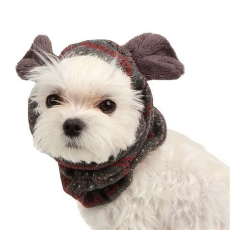 Pet Vest To Save Your Poochs Day by 17 Best Images About Cozy Winter Wear On