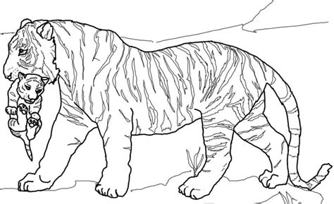 coloring pages lions tigers tiger cub coloring page coloring pages cats lions tigers
