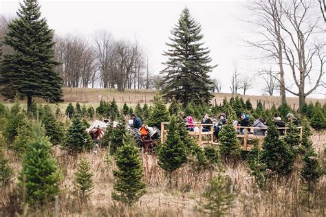 where to harvest your own christmas tree in the kawarthas