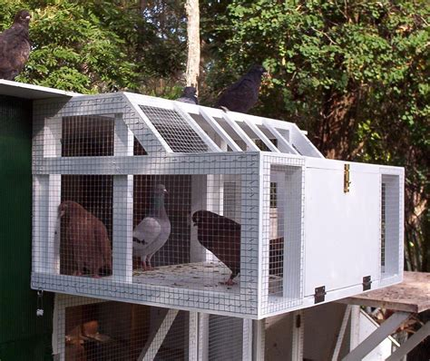 how to cage a pigeon cage for sale design size plans